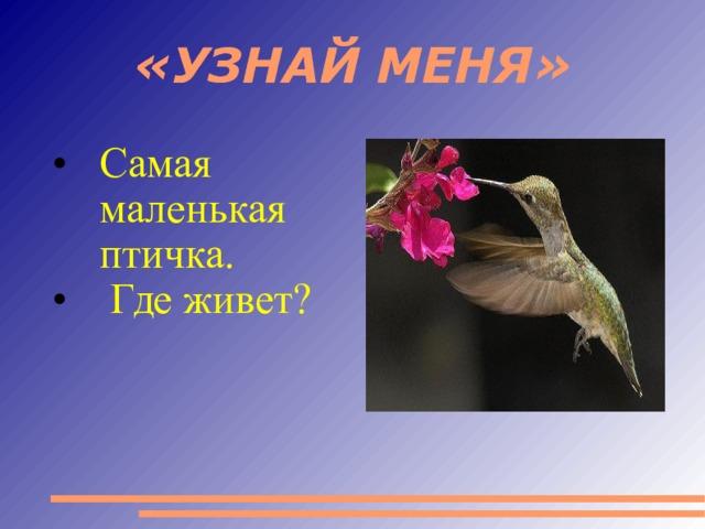 «УЗНАЙ МЕНЯ» Самая маленькая птичка.  Где живет?