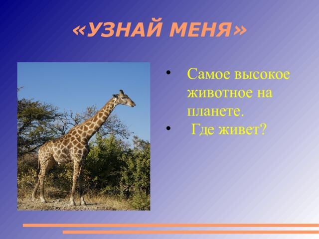 «УЗНАЙ МЕНЯ» Самое высокое животное на планете.  Где живет?