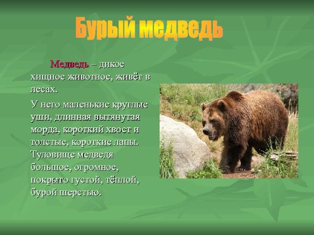 Медведь – дикое хищное животное, живёт в лесах.  У него маленькие круглые уши, длинная вытянутая морда, короткий хвост и толстые, короткие лапы. Туловище медведя большое, огромное, покрыто густой, тёплой, бурой шерстью.