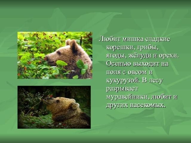 Любит мишка сладкие корешки, грибы, ягоды, жёлуди и орехи. Осенью выходит на поля с овсом и кукурузой. В лесу разрывает муравейники, любит и других насекомых.
