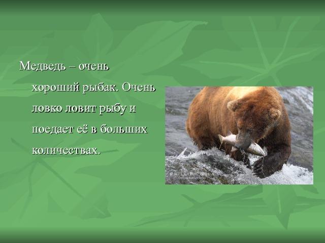 Медведь – очень хороший рыбак. Очень ловко ловит рыбу и поедает её в больших количествах.
