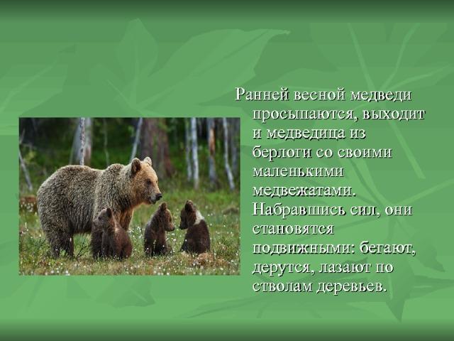 Ранней весной медведи просыпаются, выходит и медведица из берлоги со своими маленькими медвежатами. Набравшись сил, они становятся подвижными: бегают, дерутся, лазают по стволам деревьев.