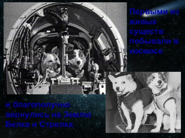 Первыми из живых существ побывали в космосе  и благополучно вернулись на Землю Белка и Стрелка.