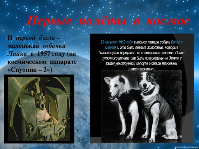 Первые полёты в космос И первой была – маленькая собачка  Лайка в 1957 году (на космическом аппарате «Спутник – 2»)