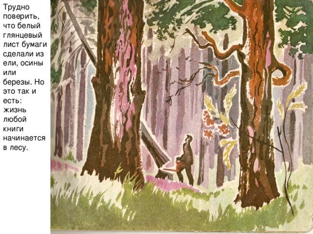 Трудно поверить, что белый глянцевый лист бумаги сделали из ели, осины или березы. Но это так и есть: жизнь любой книги начинается в лесу.