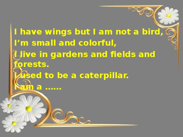 I have wings but I am not a bird, I'm small and colorful, I live in gardens and fields and forests. I used to be a caterpillar. I am a ……