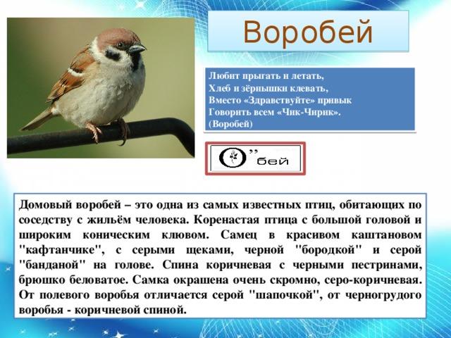 Воробей Любит прыгать и летать,  Хлеб и зёрнышки клевать,  Вместо «Здравствуйте» привык  Говорить всем «Чик-Чирик».  (Воробей) Домовый воробей – это одна из самых известных птиц, обитающих по соседству с жильём человека. Коренастая птица с большой головой и широким коническим клювом. Самец в красивом каштановом