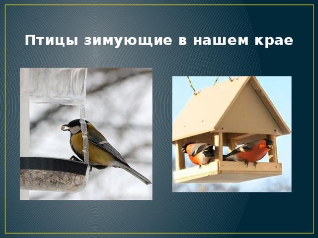 Птицы зимующие в нашем крае