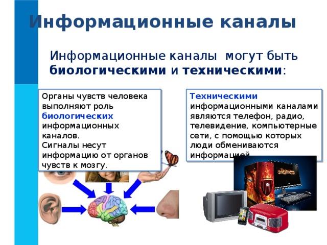 Информационные каналы Информационные каналы могут быть биологическими и техническими : Органы чувств человека выполняют роль биологических информационных каналов. Техническими  информационными каналами являются телефон, радио, телевидение, компьютерные сети, с помощью которых люди обмениваются информацией. Сигналы несут информацию от органов чувств к мозгу.