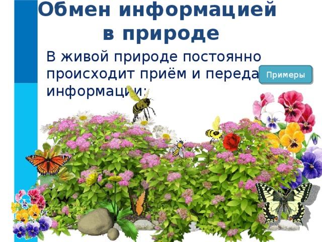 Обмен информацией  в природе В живой природе постоянно происходит приём и передача информации: Примеры