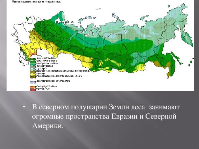В северном полушарии Земли леса занимают огромные пространства Евразии и Северной Америки.