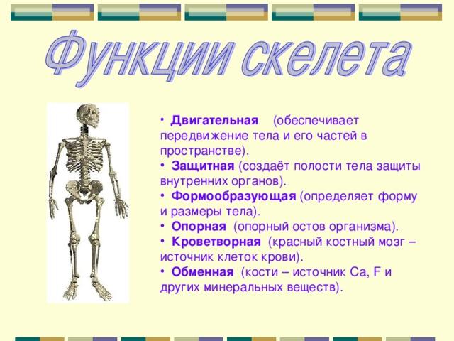 Двигательная (обеспечивает передвижение тела и его частей в пространстве).  Защитная (создаёт полости тела защиты внутренних органов).  Формообразующая (определяет форму и размеры тела).  Опорная (опорный остов организма).  Кроветворная (красный костный мозг – источник клеток крови).  Обменная (кости – источник Ca , F и других минеральных веществ).