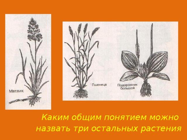 Каким общим понятием можно назвать три остальных растения