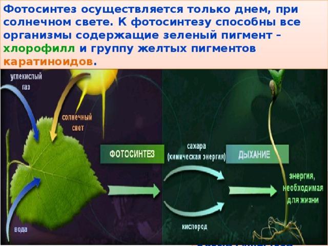 баня растения не способные к фотосинтезу оформлении одежды часто