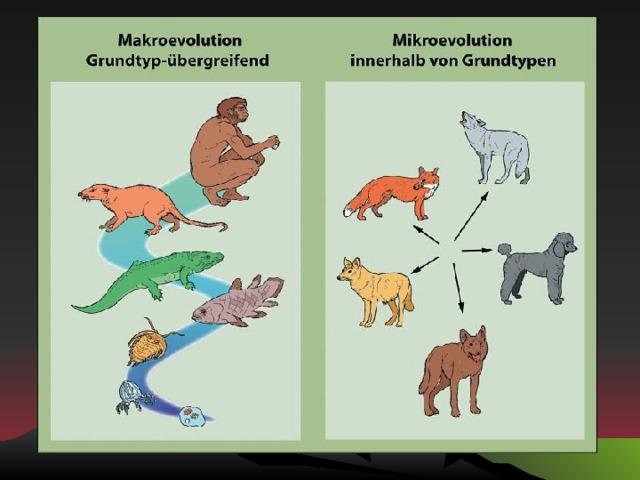 Таким образом, в эволюционном процессе выделяют два уровня: микроэволюционный макроэволюционный