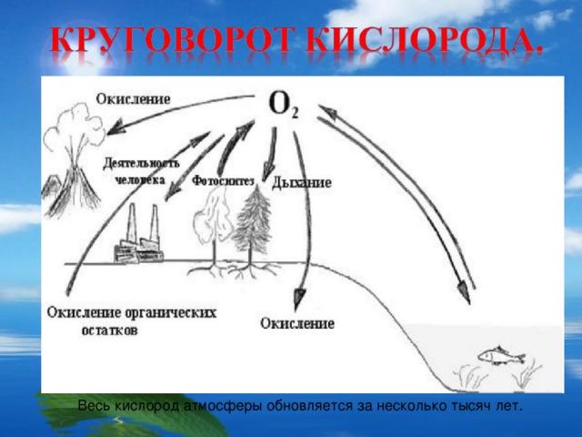 Весь кислород атмосферы обновляется за несколько тысяч лет.