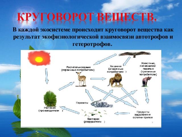 В каждой экосистеме происходит круговорот вещества как результат экофизиологической взаимосвязи автотрофов и гетеротрофов.
