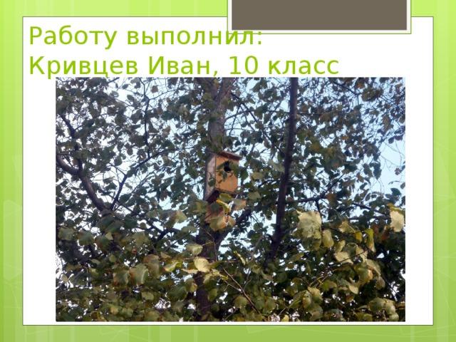 Работу выполнил:  Кривцев Иван, 10 класс