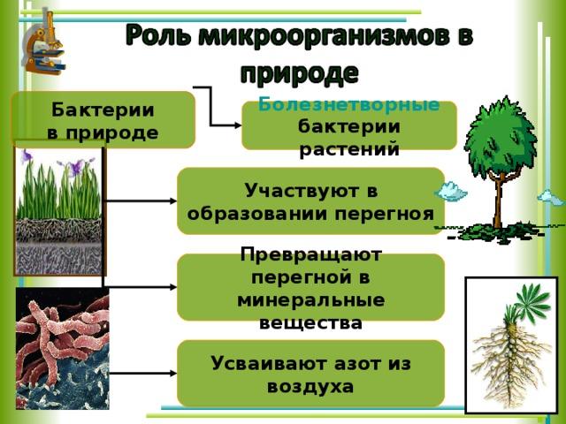 Бактерии  в природе Болезнетворные  бактерии растений Участвуют в образовании перегноя Превращают перегной в минеральные вещества Усваивают азот из воздуха 18 18