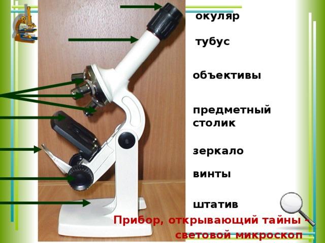 окуляр  тубус  объективы предметный столик зеркало винты штатив  Прибор, открывающий тайны – световой микроскоп