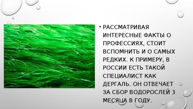 Рассматривая интересные факты о профессиях, стоит вспомнить и о самых редких. К примеру, в России есть такой специалист как дергаль. Он отвечает за сбор водорослей 3 месяца в году.