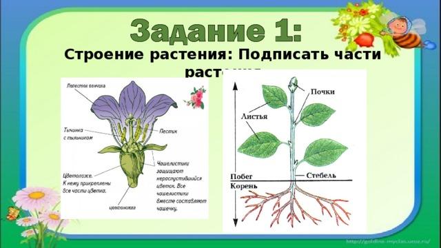 Строение растения: Подписать части растения