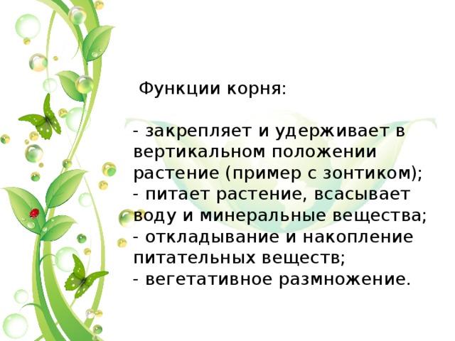 Функции корня: - закрепляет и удерживает в вертикальном положении растение (пример с зонтиком); - питает растение, всасывает воду и минеральные вещества; - откладывание и накопление питательных веществ; - вегетативное размножение.