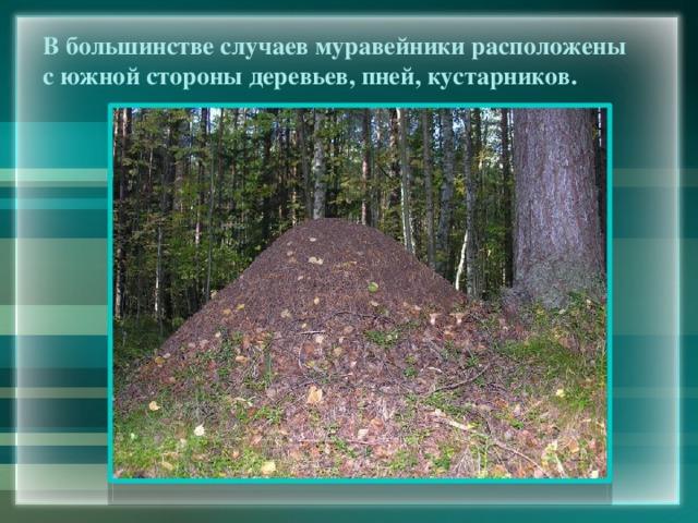 В большинстве случаев муравейники расположены с южной стороны деревьев, пней, кустарников.
