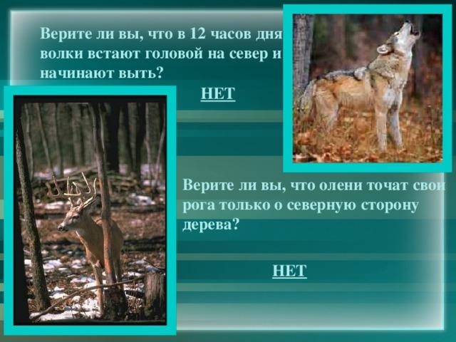Верите ли вы, что в 12 часов дня волки встают головой на север и начинают выть? НЕТ Верите ли вы, что олени точат свои рога только о северную сторону дерева? НЕТ