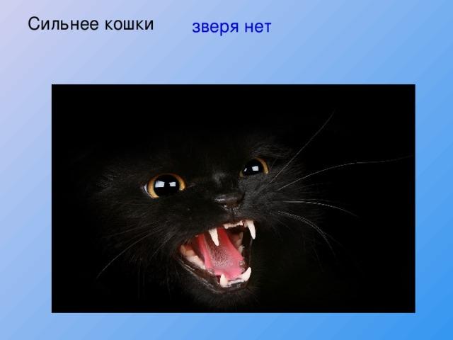 Сильнее кошки зверя нет