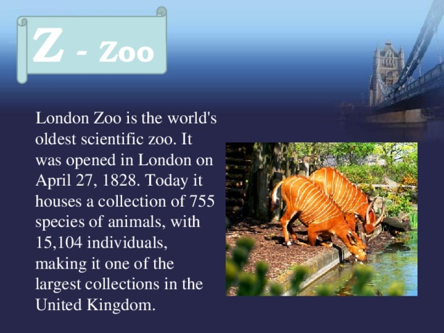 Z - Zoo  London Zoo is the world's oldest scientific zoo. It was opened in London on April 27, 1828. Today it houses a collection of 755 species of animals, with 15,104 individuals, making it one of the largest collections in the United Kingdom.