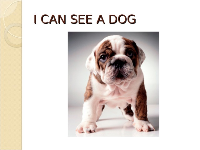 I CAN SEE A DOG