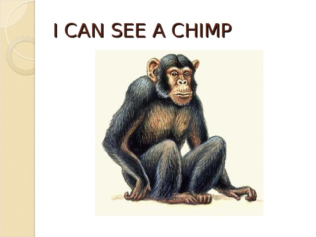 I CAN SEE A CHIMP