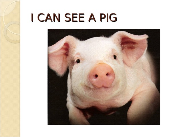 I CAN SEE A PIG