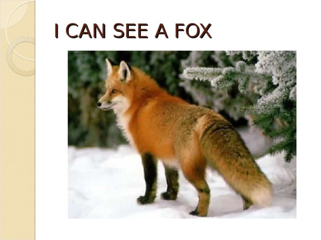 I CAN SEE A FOX