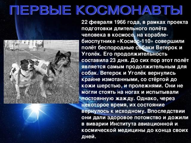22 февраля 1966 года, в рамках проекта подготовки длительного полёта человека в космосе, на корабле-биоспутнике «Космос-110» совершили полёт беспородные собаки Ветерок и Уголёк. Его продолжительность составила 23 дня. До сих пор этот полёт является самым продолжительным для собак. Ветерок и Уголёк вернулись крайне измотанными, со стёртой до кожи шерстью, и пролежнями. Они не могли стоять на ногах и испытывали постоянную жажду. Однако, через некоторое время, их состояние вернулось к исходному. Впоследствии они дали здоровое потомство и дожили в виварии Института авиационной и космической медицины до конца своих дней.
