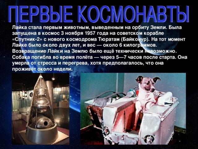 Лайка стала первым животным, выведенным на орбиту Земли. Была запущена в космос 3 ноября 1957 года на советском корабле «Спутник-2» с нового космодрома Тюратам (Байконур). На тот момент Лайке было около двух лет, и вес — около 6 килограммов. Возвращение Лайки на Землю было ещё технически невозможно. Собака погибла во время полёта — через 5—7 часов после старта. Она умерла от стресса и перегрева, хотя предполагалось, что она проживёт около недели.