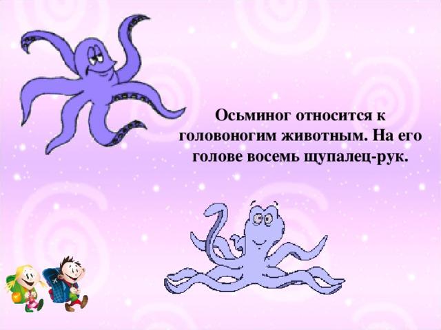 Осьминог относится к головоногим животным. На его голове восемь щупалец-рук.