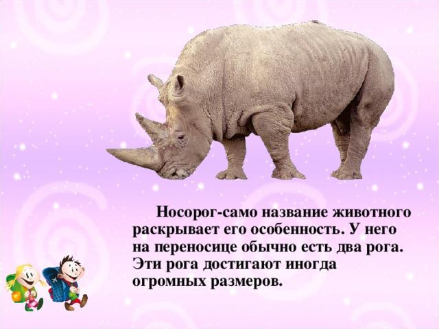 Носорог-само название животного раскрывает его особенность. У него на переносице обычно есть два рога. Эти рога достигают иногда огромных размеров.