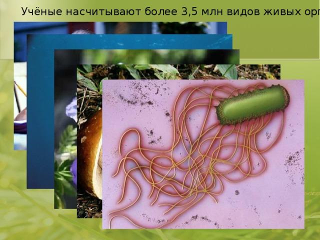 Учёные насчитывают более 3,5 млн видов живых организмов