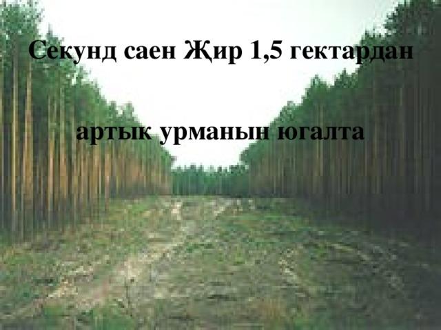 Секунд саен Җир 1,5 гектардан артык урманын югалта