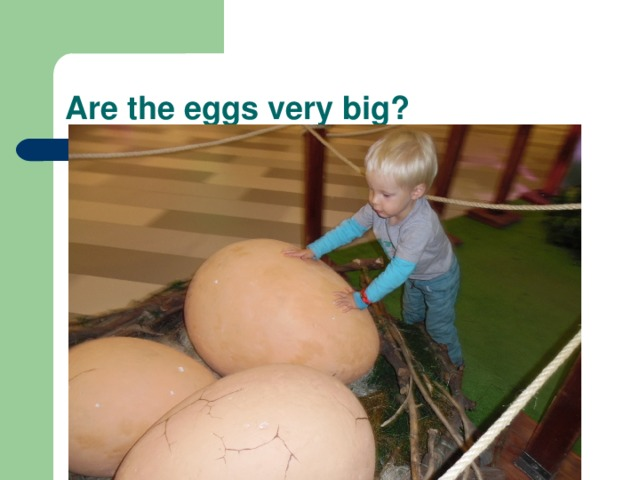 Are the eggs very big?