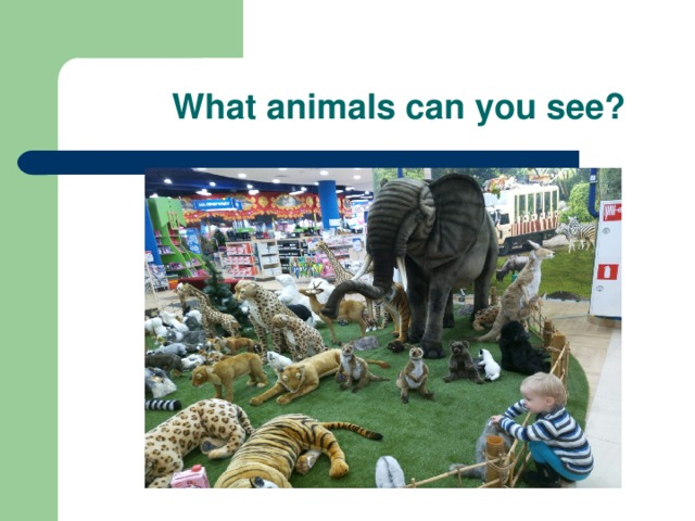 What animals can you see ?