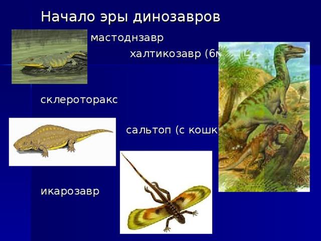 Начало эры динозавров  мастоднзавр  халтикозавр (6м) склероторакс  сальтоп (с кошку) икарозавр