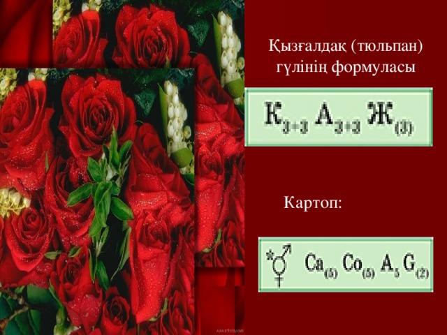 Қызғалдақ (тюльпан) гүлінің формуласы Картоп: