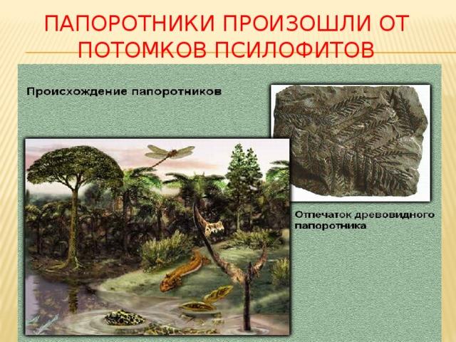 Папоротники произошли от потомков псилофитов
