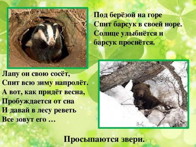 Под берёзой на горе Спит барсук в своей норе. Солнце улыбнётся и барсук проснётся. Лапу он свою сосёт,  Спит всю зиму напролёт.  А вот, как придёт весна,  Пробуждается от сна  И давай в лесу реветь  Все зовут его … Просыпаются звери.