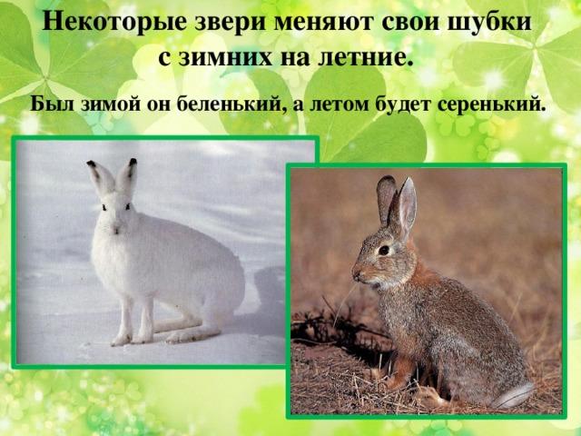 Некоторые звери меняют свои шубки  с зимних на летние. Был зимой он беленький, а летом будет серенький.