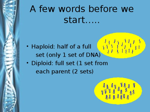 A few words before we start….. Haploid: half of a full  set (only 1 set of DNA) Diploid: full set (1 set from  each parent (2 sets) Haploid – number of chromosomes in sex cells represented by n indicating one chromosome Diploid - number of chromosomes in somatic cells represented by 2n indicating a set or double number of chromosomes