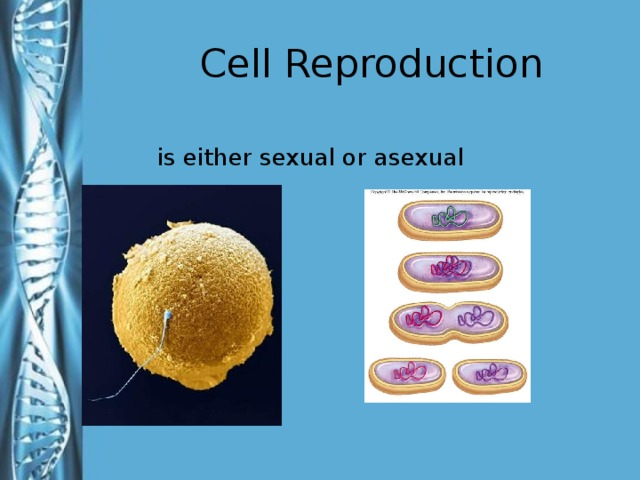 Cell Reproduction is either sexual or asexual